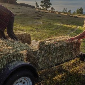 Hauling Hay On A Monday Evening