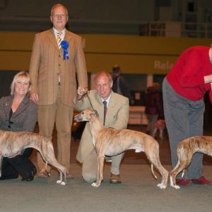 WHIPPETS AT LADIES KENNEL ASSOCIATION 2010