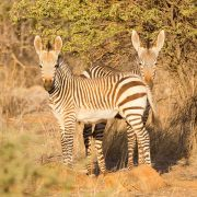 Erindi Private Game Reserve - Namibia