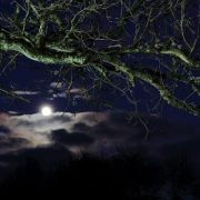 Old oak and the moon