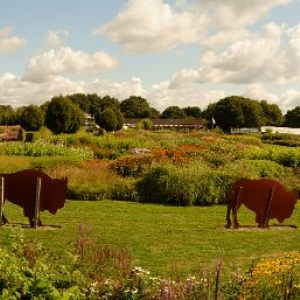 Pictures of Great Dixter and Sussex Prairie Gardens