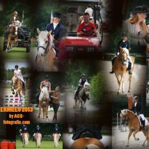 Haflinger weekend Ermelo 2013
