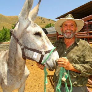 Recogida Burros para Donkeys and Birds