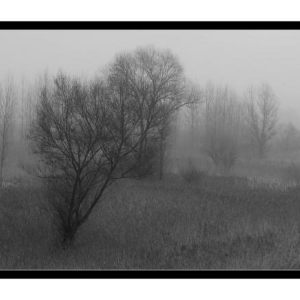A Foggy Day - BW
